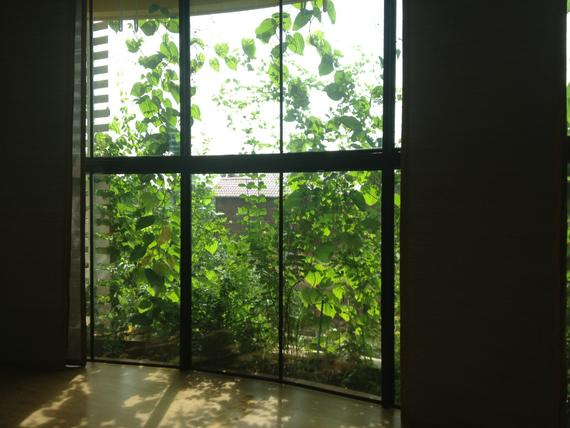 Vertical forests is helping to cool the office space