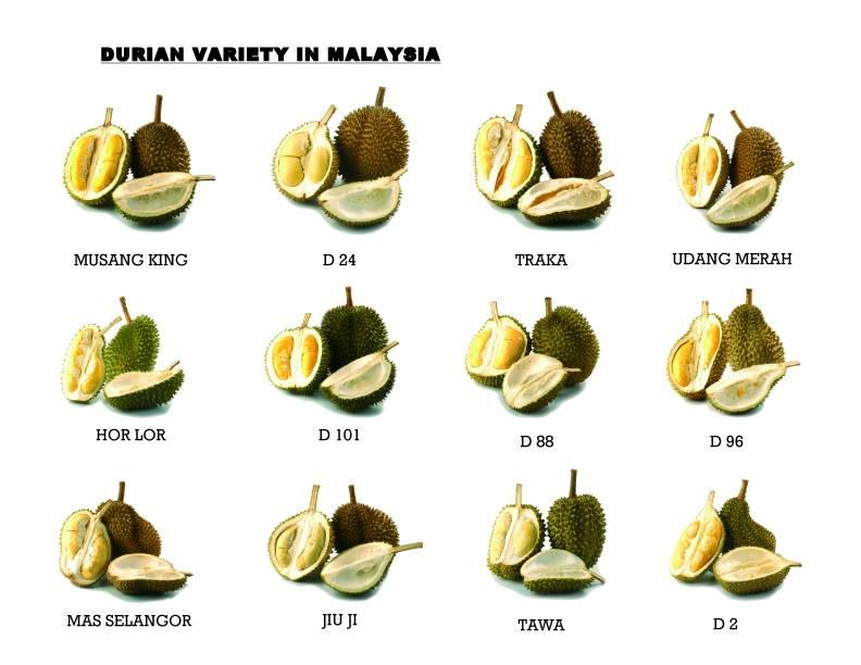 Durian Variety In Malaysia