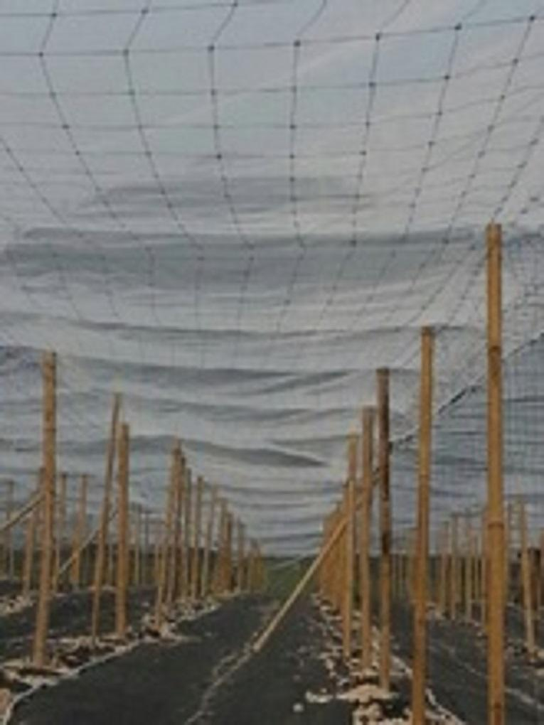 Plant insect net for agriculture use