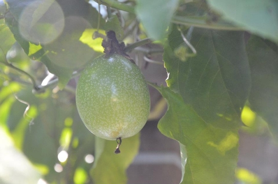 LIFE LIGHT PASSION FRUITS