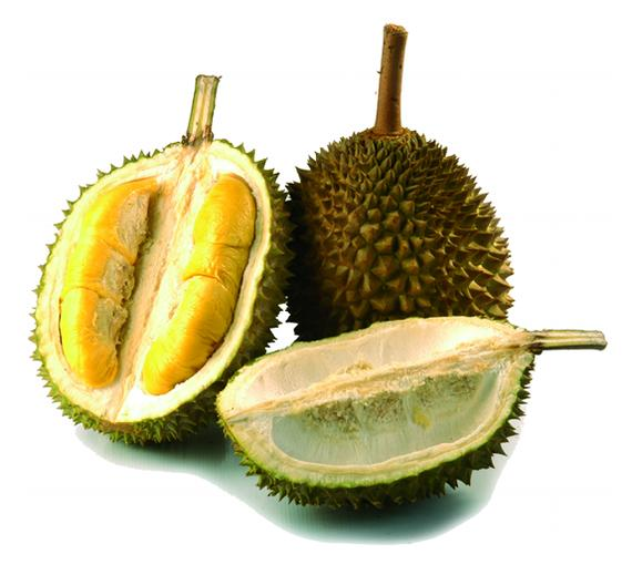 What is Durian?