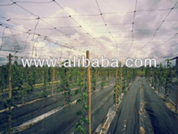 Agriculture Plant Support Net