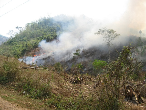 Land clearing for upland rice fields
