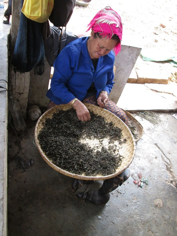Phu Noi lady sorting tea leaves