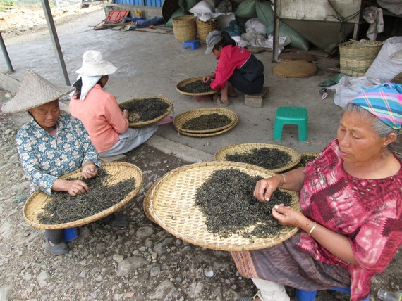 Phu Noi ladies sorting tea leaves to quality grade