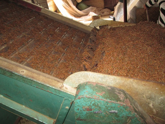 Tea coming out of roaster oven