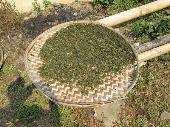 Sun dried fresh tea leaves