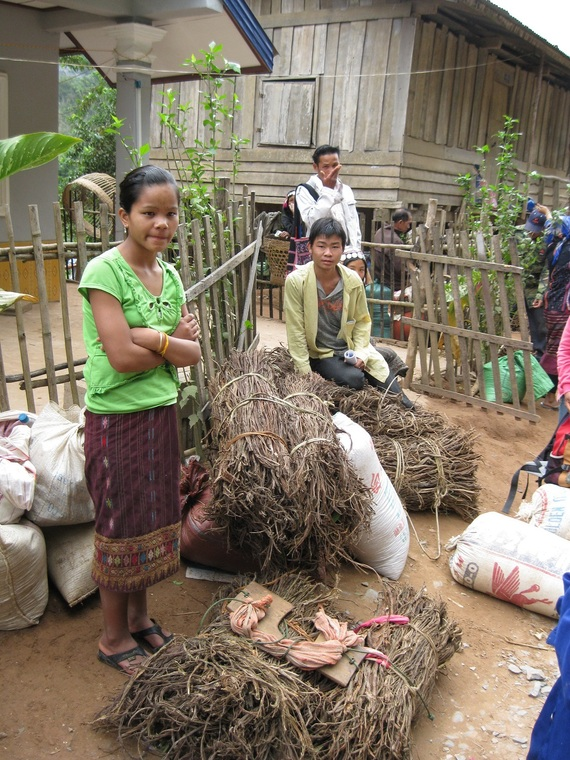 Khmu kids selling family dried cardomon