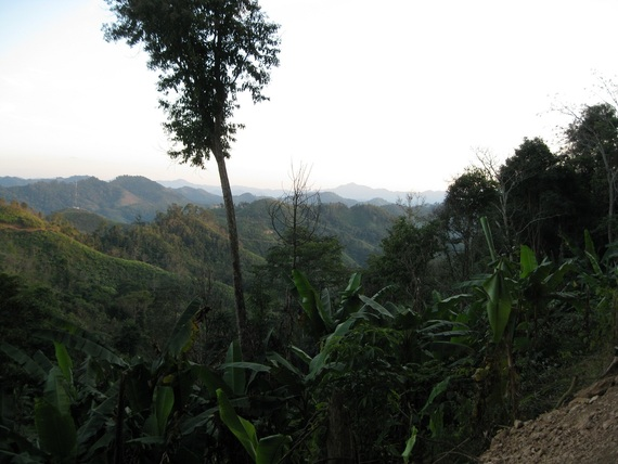 Wild forest banana tree and mountains and swiddens Samphan area PSL